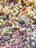 Une boîte de raisins pourpres et verts images stock