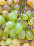 Une boîte de raisins verts image stock