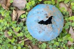 Une boule de mastication de chien image stock