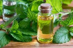 Une bouteille d'huile essentielle de mélisse avec la mélisse fraîche part photos libres de droits