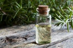 Une bouteille d'huile essentielle de romarin avec des brindilles de romarin Images libres de droits