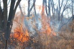 Une brûlure contrôlée dans les bois photographie stock libre de droits