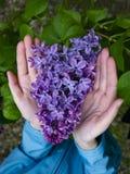 Une branche avec de grandes fleurs de lilas chez les mains des enfants photographie stock libre de droits