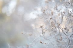 Une branche avec le fond en pastel de petits cônes avec le bokeh photographie stock libre de droits