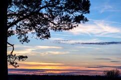 Une branche d'arbre au coucher du soleil. Photographie stock libre de droits