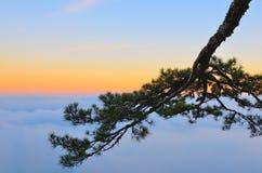 Une branche d'arbre au-dessus des nuages au coucher du soleil Images stock