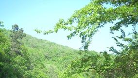 Une branche d'arbre tremblant dans le vent contre le ciel bleu et la montagne verte 4k, mouvement lent banque de vidéos