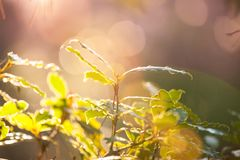 Une branche d'une jeune plante verte photo stock