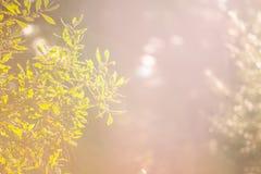 Une branche d'une jeune plante verte photographie stock libre de droits