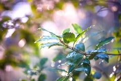 Une branche d'une jeune plante verte photo libre de droits