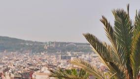 Une branche d'un palmier dans la perspective de la ville de Barcelone banque de vidéos