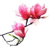 Une branche de camélia rose Images libres de droits