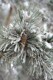 Une branche de pin avec une bosse dans la neige Photographie stock