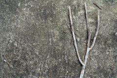 Une branche grise sur une roche images stock