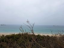 Une branche sèche en île images libres de droits