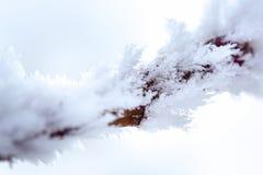 Une brindille congelée Photos libres de droits