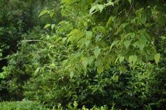 Une brindille d'une usine dans la perspective des arbres Photographie stock libre de droits