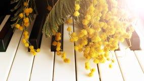 Une brindille de mimosa sur le piano Musique de ressort Clés noires et blanches photographie stock