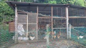 Une cage de poulet en bois typique image libre de droits