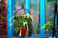 Une cage en acier noire remplie de comosum de chlorophytum est devant une fenêtre bleue sur une vieille rue Image libre de droits