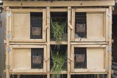 Une cage en bois pour des lapins d'élevage Images stock