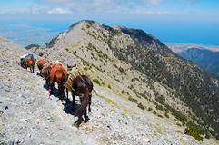 Une caravane chez le mont Olympe Photographie stock libre de droits