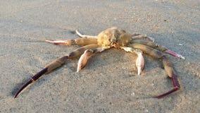 Une carcasse de crabe Image libre de droits