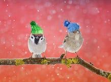 Une carte lumineuse d'amusement avec deux oiseaux mignons dans les chapeaux de knit dans le Sn Photographie stock libre de droits