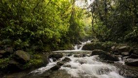 Une cascade, rivière de montagne dans la forêt tropicale de ³ de ChocÃ, Colombie Images libres de droits