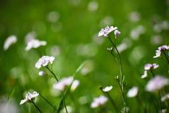 Une certaine fleur Images stock