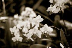 Une certaine fleur Photos stock