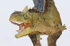 Une chair mangeant le dinosaure de Carnotaurus, Taureau carnivore Images libres de droits