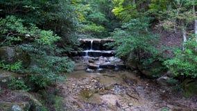 Une chute de l'eau entre au-dessus des roches dans une forêt japonaise d'automne vert luxuriant banque de vidéos