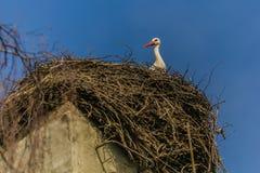 Une cigogne blanche avec le bec rouge se reposant sur le nid images stock