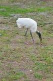 Une cigogne en bois mange l'os de poulet Photo libre de droits
