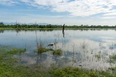 Une cigogne peinte par adulte se tient dans l'eau peu profonde d'un lac en parc national d'Udawalawe image stock
