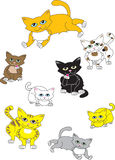 Une collection de chats Photographie stock