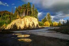 Une colline avec des pins Photographie stock libre de droits