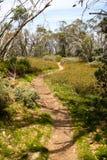 Une colline d'arbre à Mt Buller Image libre de droits