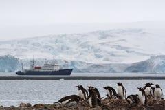 Une colonie de la Papouasie de Pygoscelis de pingouin de gentoo d'emboîtement avec un glacier de touristes de shipand à l'arrière photos stock