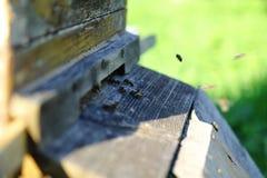 Une colonie des abeilles portent le nectar à la ruche Photographie stock libre de droits