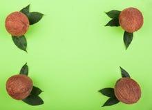Une composition des noix de coco entières sur un fond vert clair Noix de coco de bon goût pour des desserts d'été Concept tropica images stock