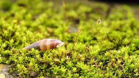 Une coquille d'escargot Photo libre de droits