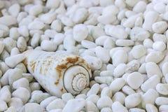 Une coquille de mer Photos libres de droits