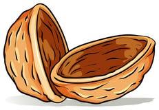 Une coquille de noix Photo libre de droits