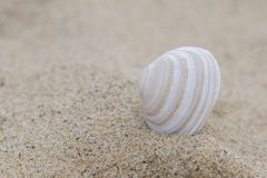 Une coquille simple dans le sable photo stock
