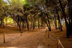 Une corde a clôturé le chemin de marche avec les arbres de penchement par une petite réservation naturelle Alcudia Photo libre de droits