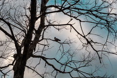 Une corneille sur un arbre mort Photo stock
