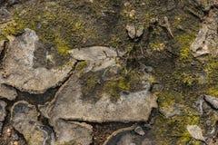 Une correction d'herbe verte sur un plancher de fissuration sec Photos stock