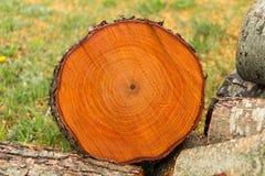 Une coupe d'un tronc d'arbre avec les anneaux annuels images libres de droits